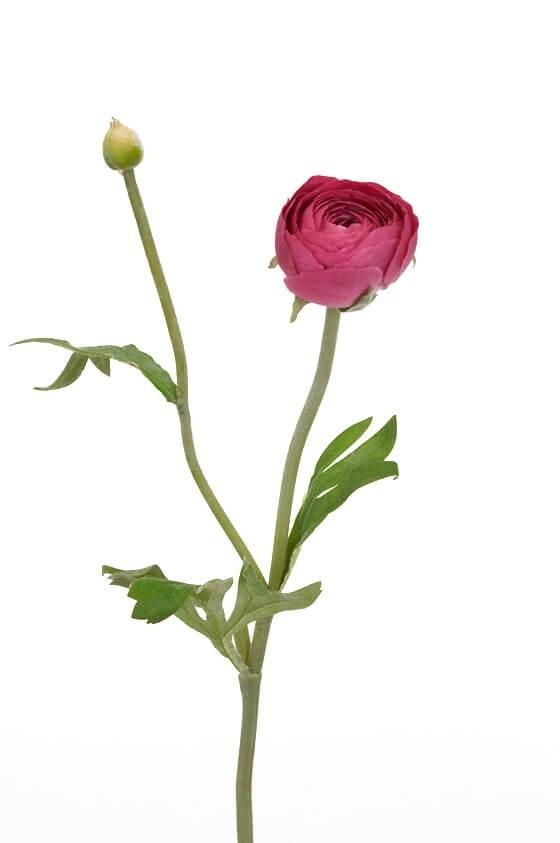 Ranunkel, lila, konstgjord blomma