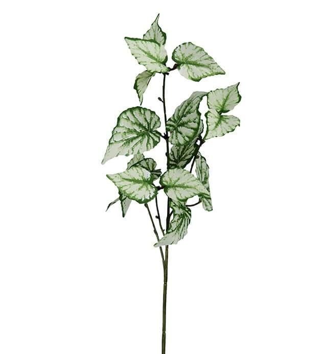 Rexbegonia, konstgjord kvist