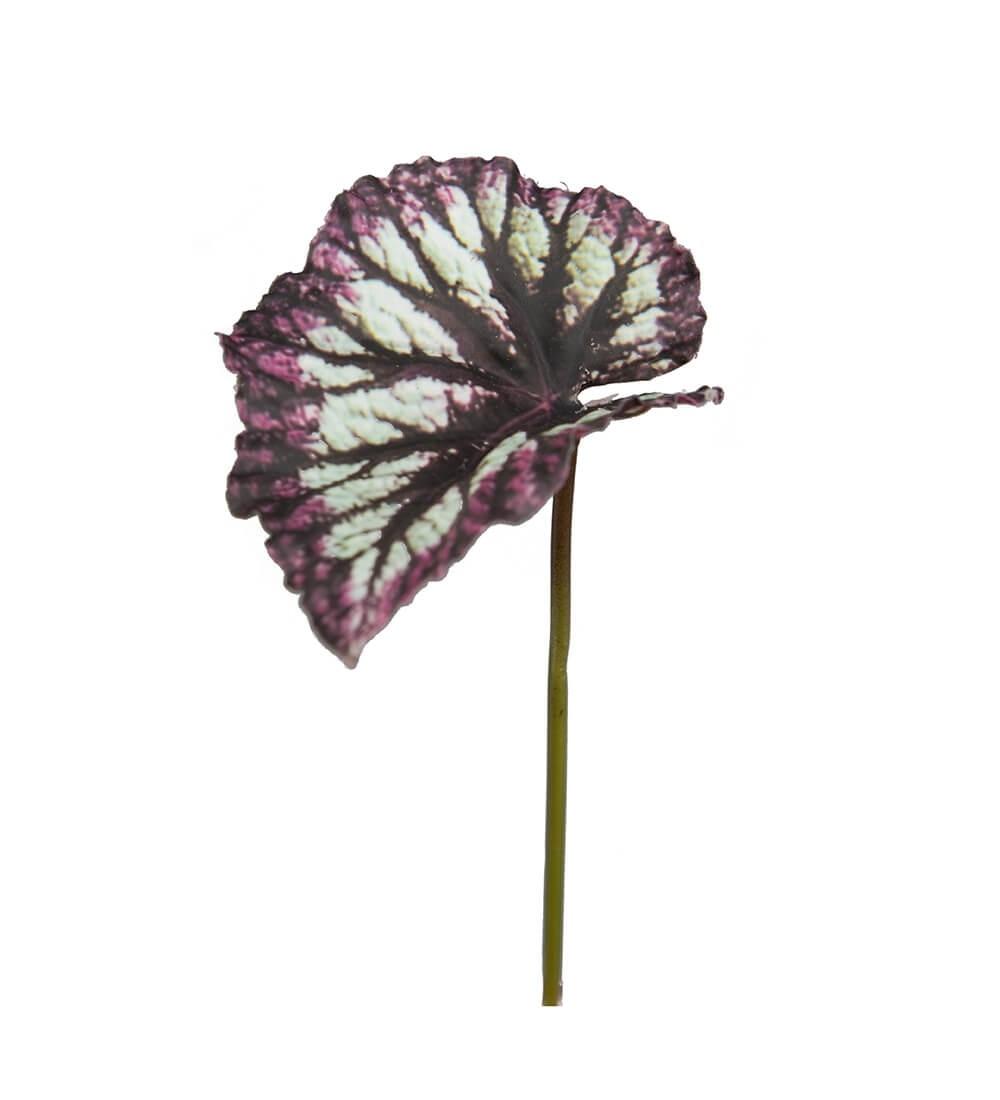 Rexbegonia, blad, konstgjort