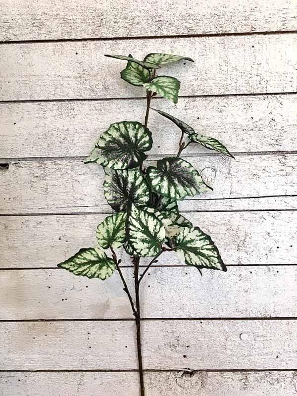 Rexbegonia, mörk, konstgjord kvist
