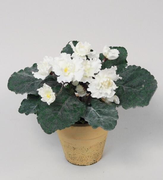 Saint paula, vit, konstgjord blomma