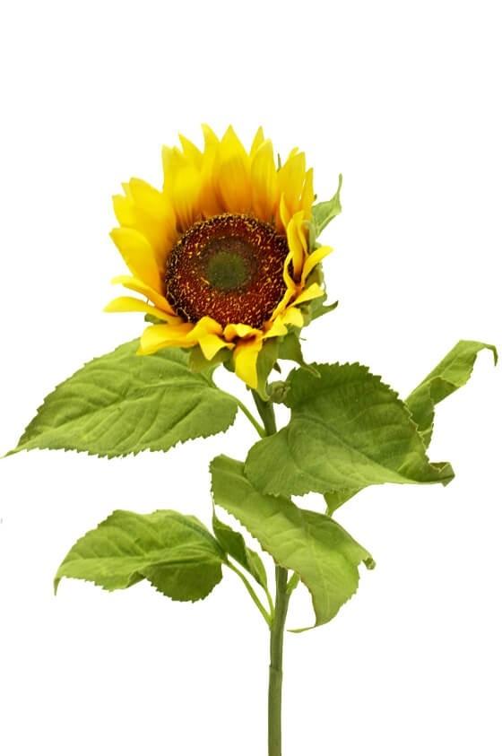 Solros, konstgjord blomma