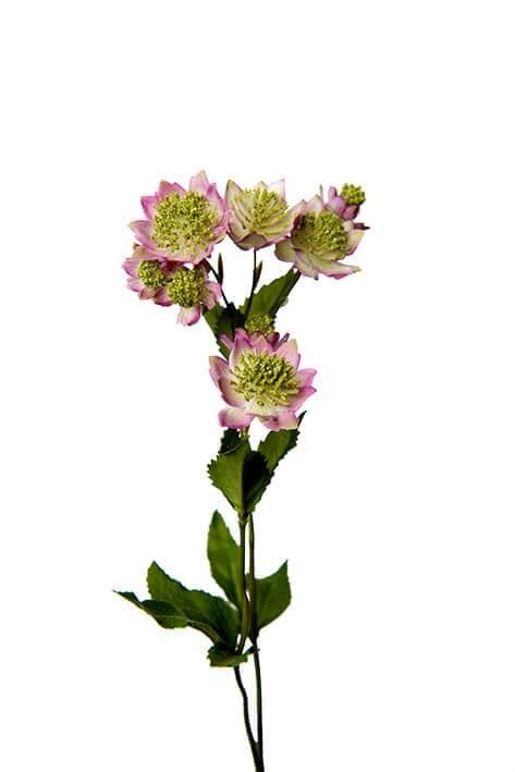 Stjärnflocka, lila vit, konstgjord blomma