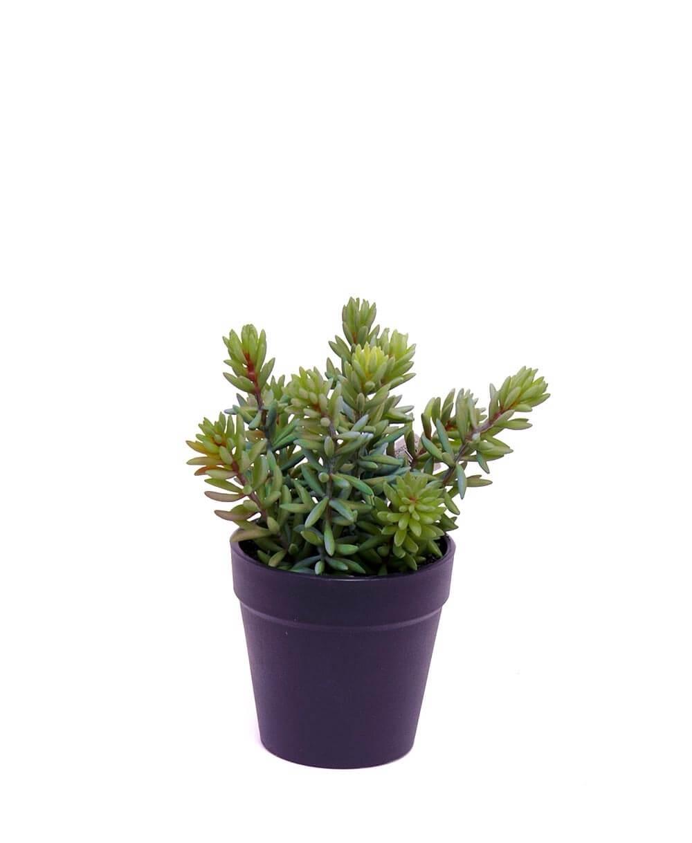 Succulent i kruka, konstgjord