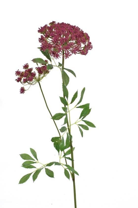 Trachelium, vinröd, konstgjord blomma