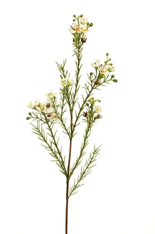 Vaxblomma, creme, konstgjord blomma