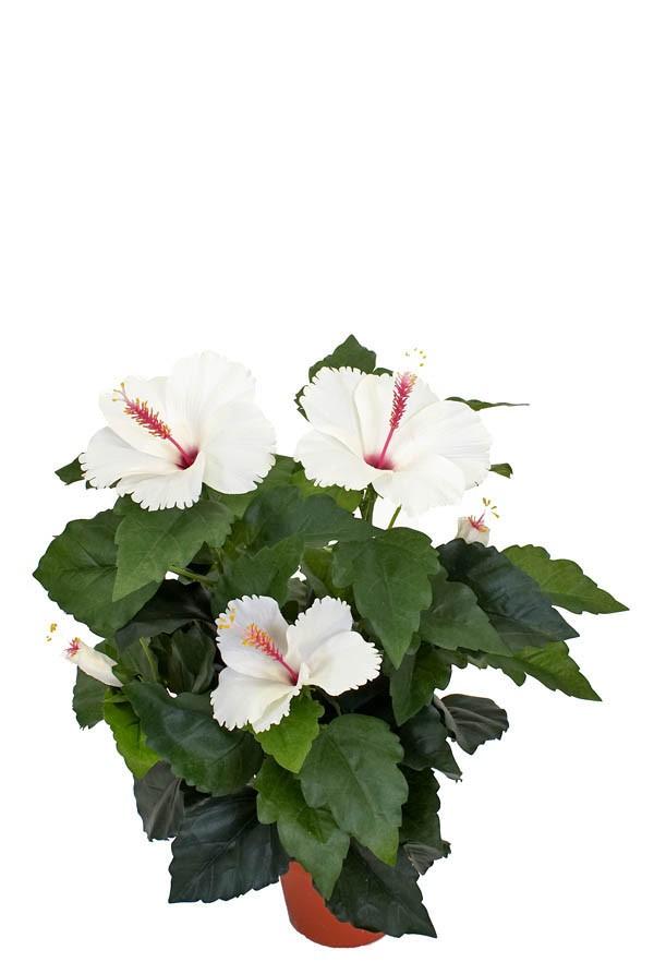 Hibiscus vit, konstgjord blomma