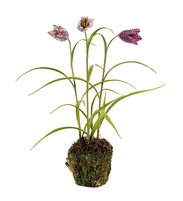 Kungsängslilja, Frittilaria, konstgjord växt