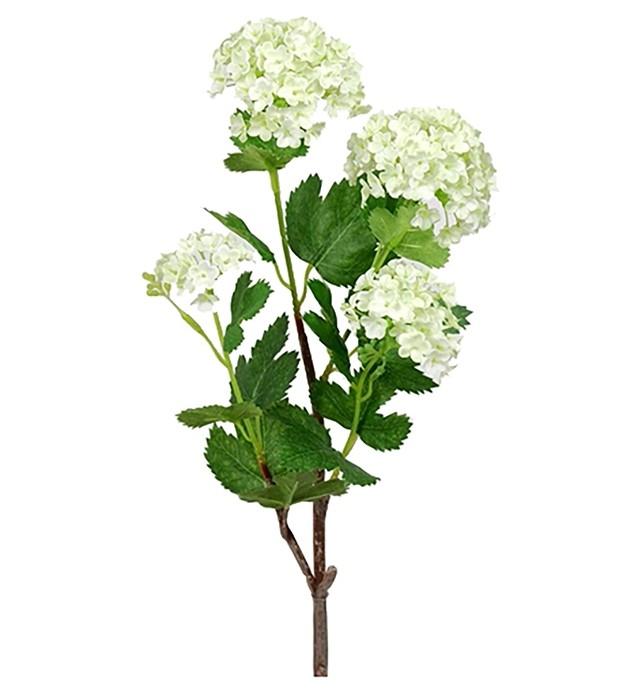 Olvon, Viburnum, konstgjord kvist
