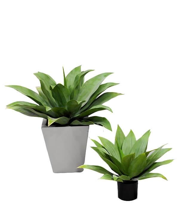 Agave gigant, konstgjord krukväxt