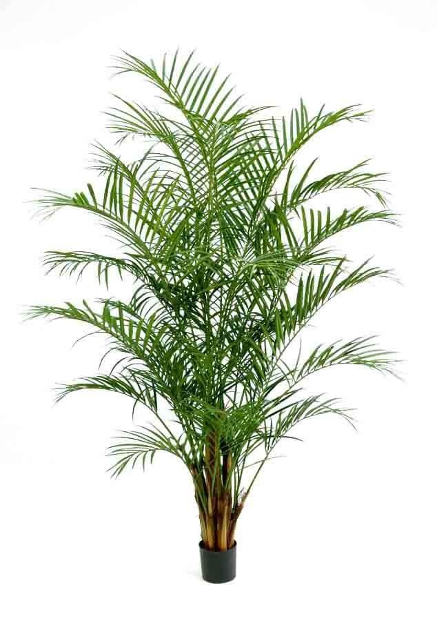 Areca palm, konstgjord