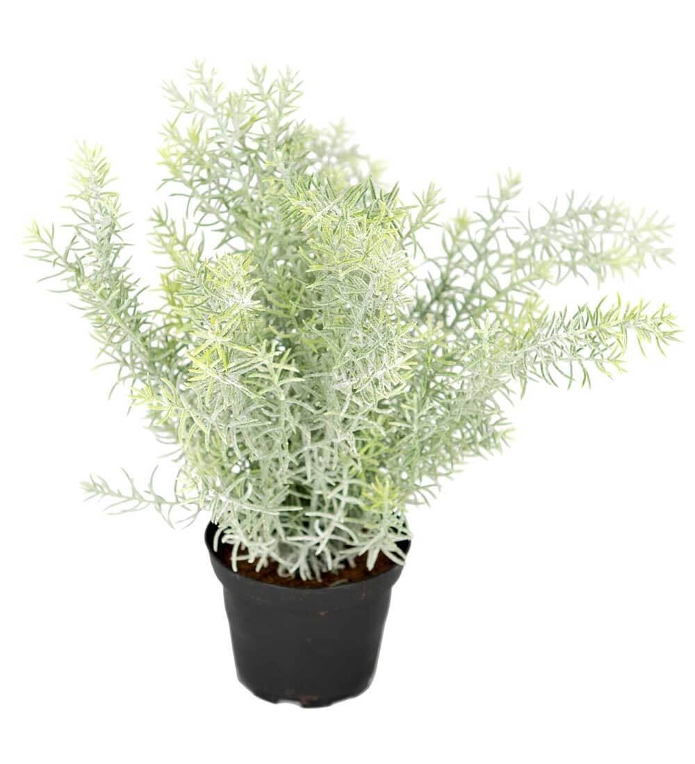 Asparagus, konstgjord krukväxt