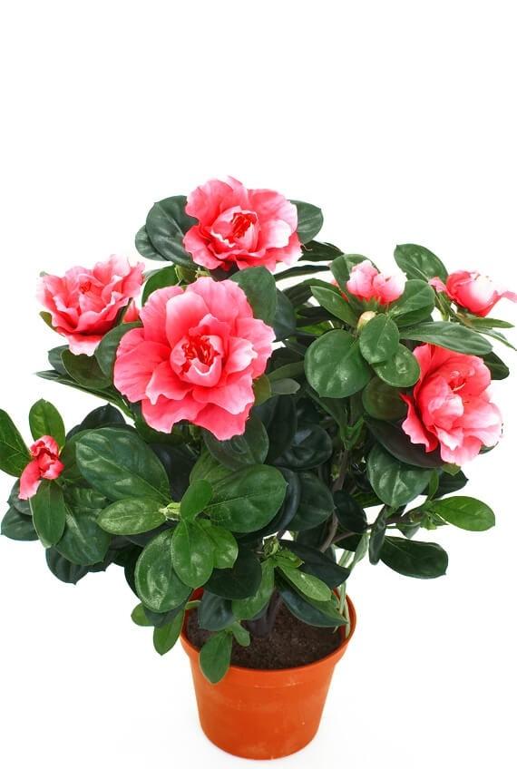 Azalea, rosa, konstgjord blomma