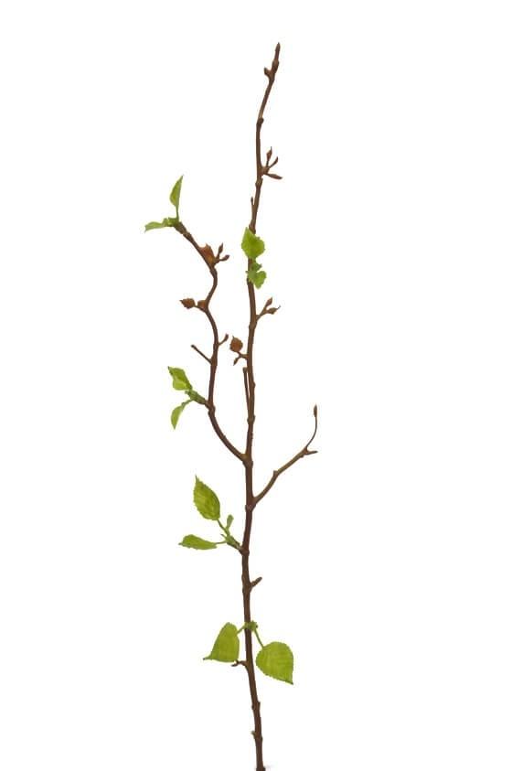 Björkkvist, konstgjord kvist, blomma