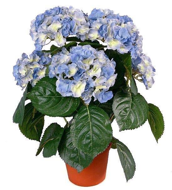 Hortensia, blå, konstgjord krukväxt