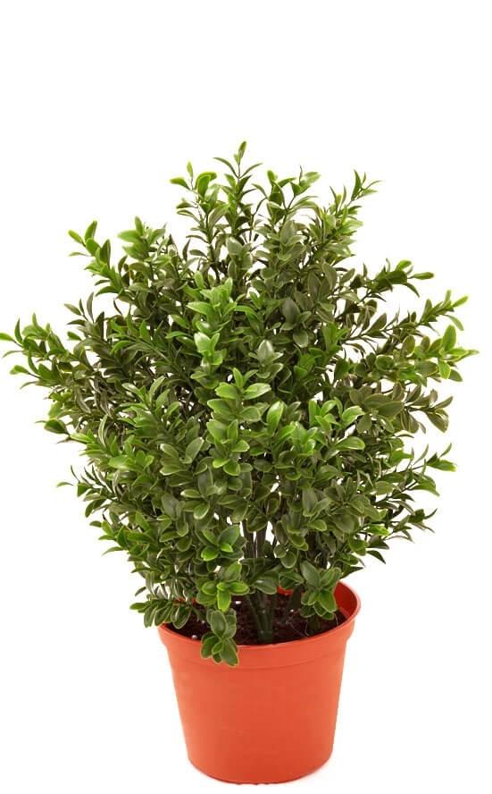 Buxbom, konstgjord krukväxt