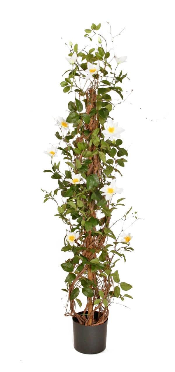 Clematis, vit, konstgjord krukväxt