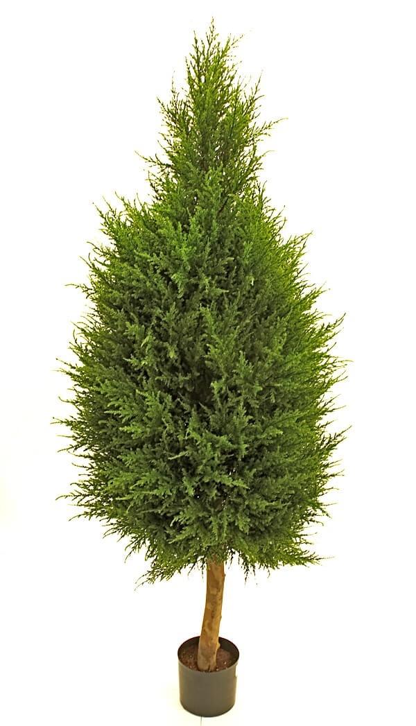 Cypress på stam, konstgjord
