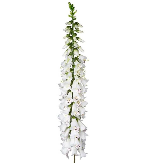 Fingerborgsblomma, vit, jättestor, konstgjord blomma
