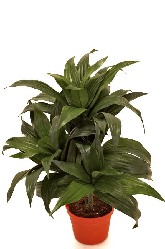 Dracena, konstgjord krukväxt