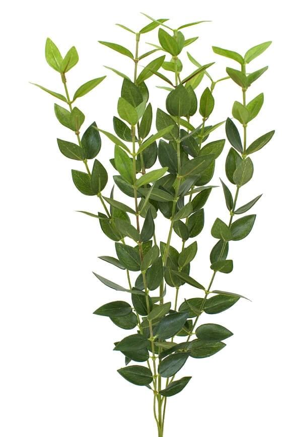 Eucalyptus, konstgjord kvist