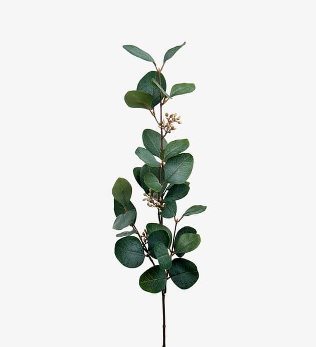 Eucalyptus med bär, konstgjord kvist