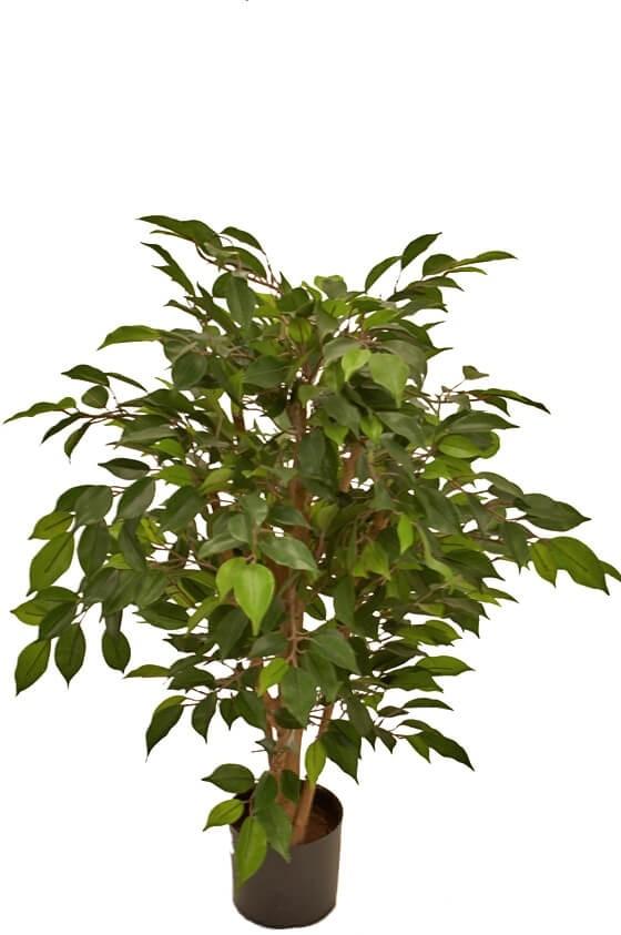 Ficus, konstgjort träd
