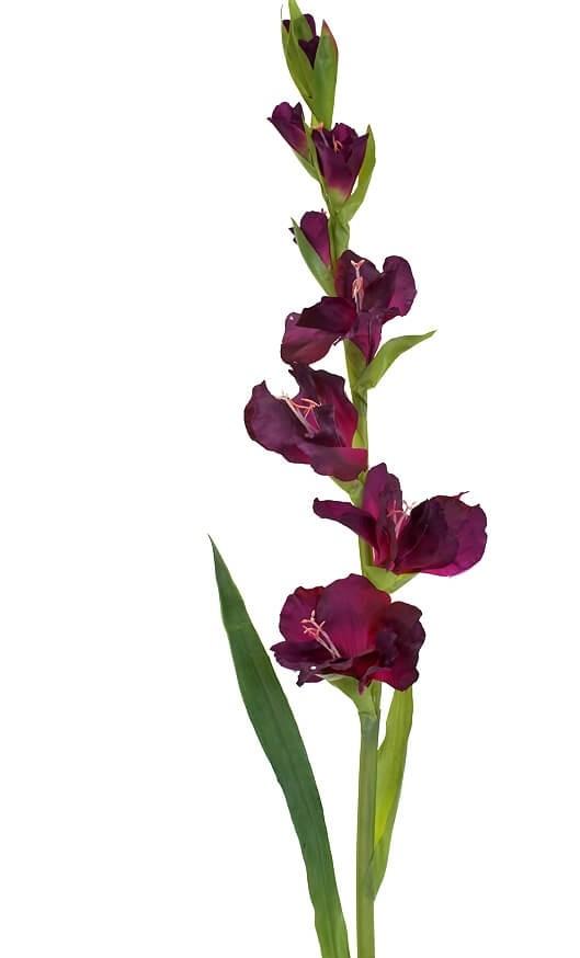 Gladiolus, lila, konstgjord blomma