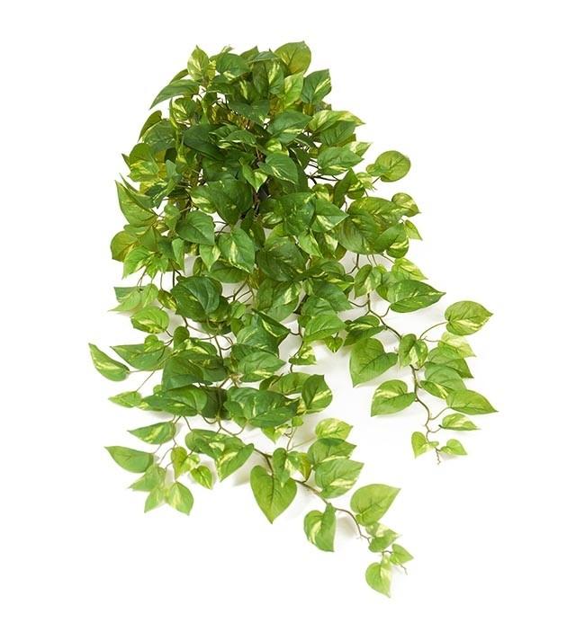 Gullranka, Epipremnum, konstgjord växt