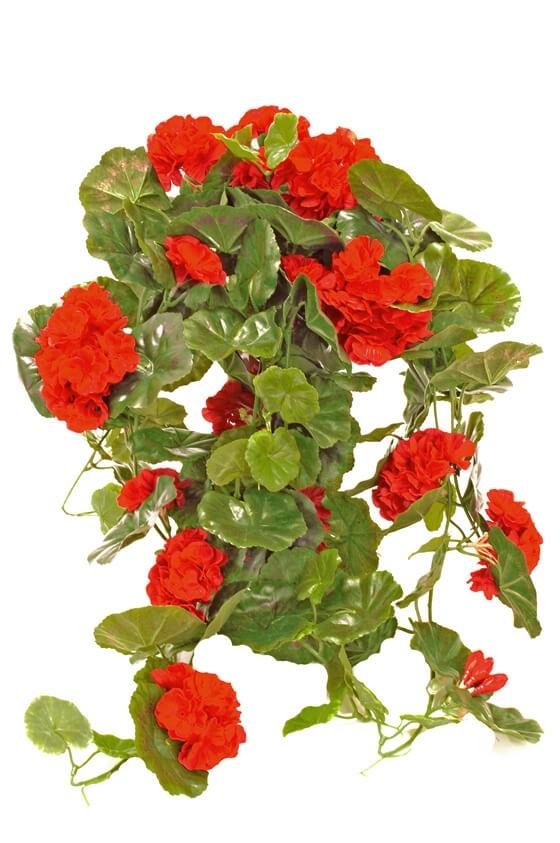 Hängpelargon, röd, konstgjord krukväxt, blomma, sommar