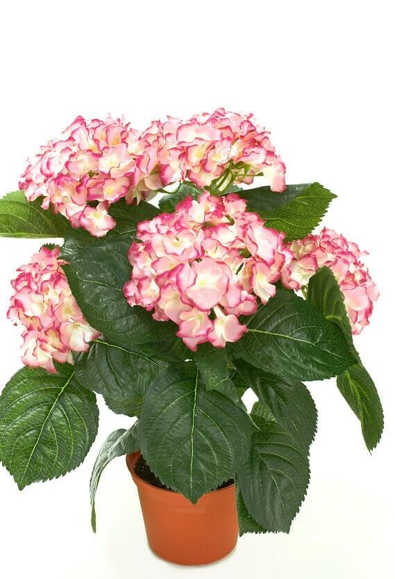Hortensia, rosa cerise, konstgjord krukväxt