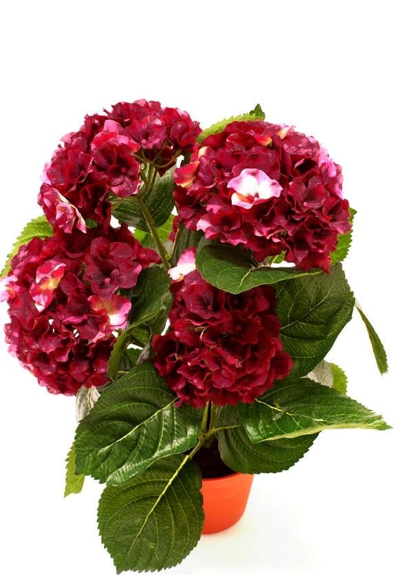 Hortensia, vinröd, konstgjord krukväxt