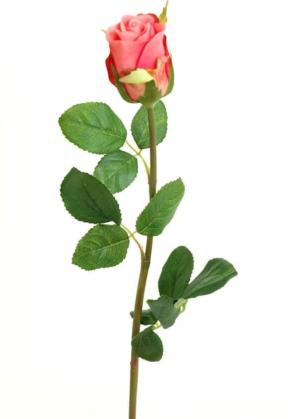 Ros, cerise, rosa, konstgjord blomma