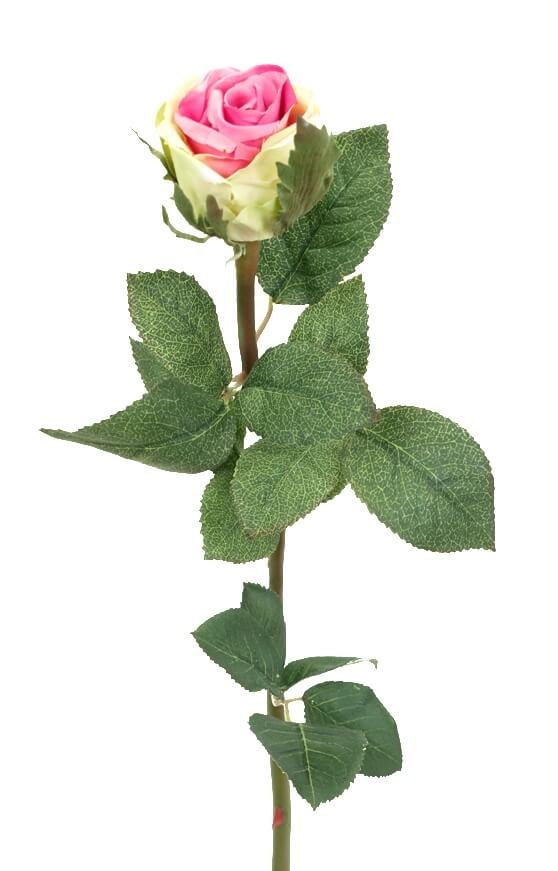 Ros, rosa, lime, konstgjord blomma