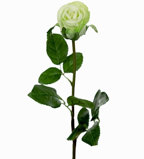 Ros, vit, lime, konstgjord blomma
