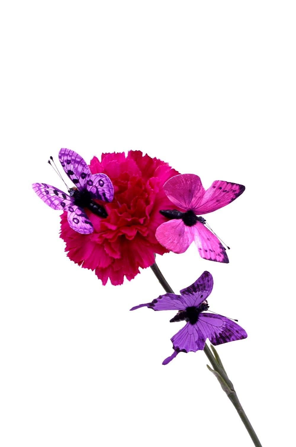 fjäril, lila 3-pack
