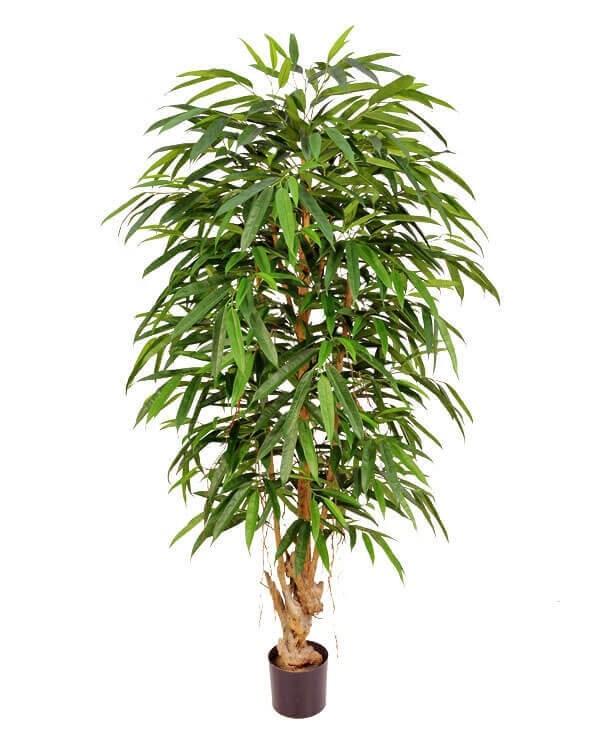Longifolia, konstgjord