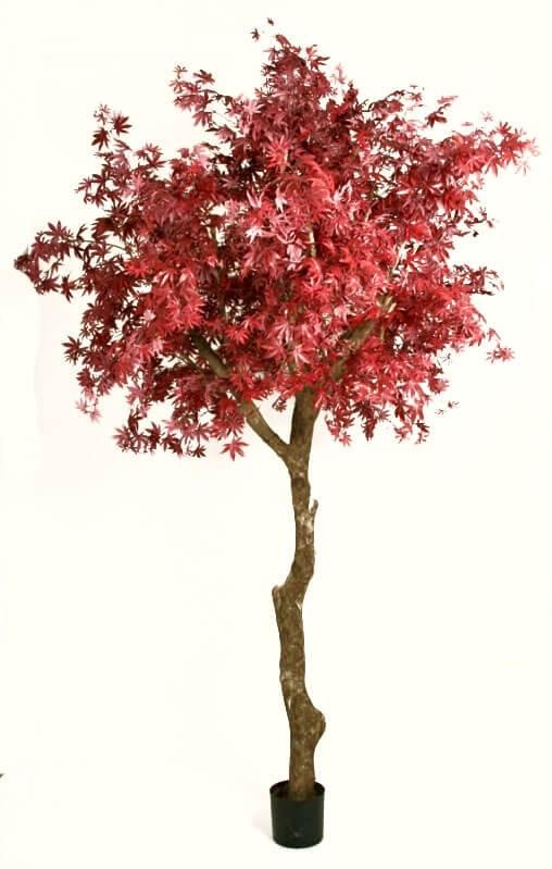 Lönn, vinröd, konstgjort träd