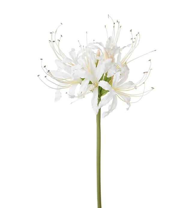 Nerine, vit, konstgjord blomma