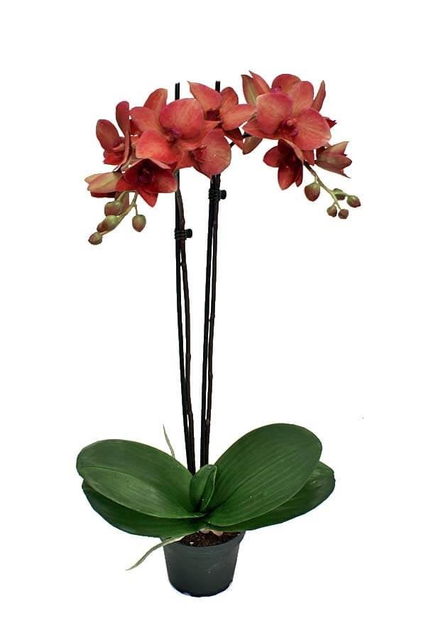Orkidé, vinröd, konstgjord