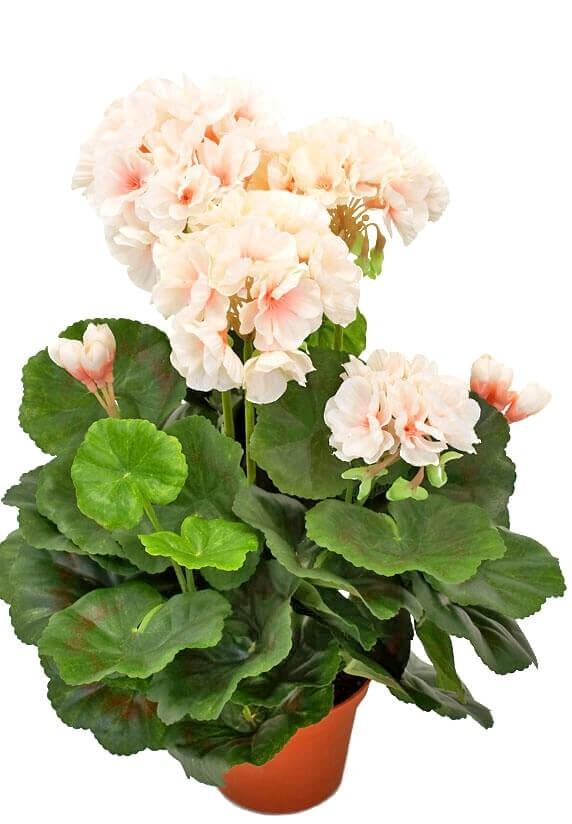 Pelargon, creme/rosa, konstgjord krukväxt