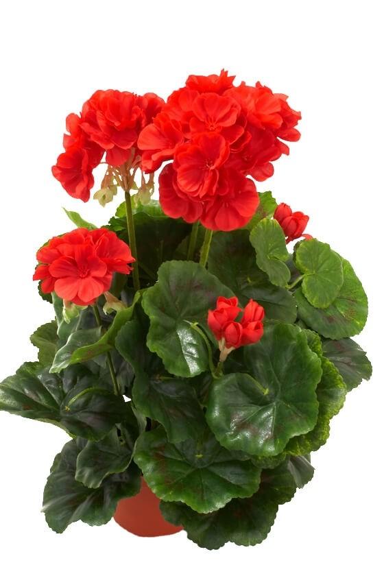 Pelargonia, röd, konstgjord blomma