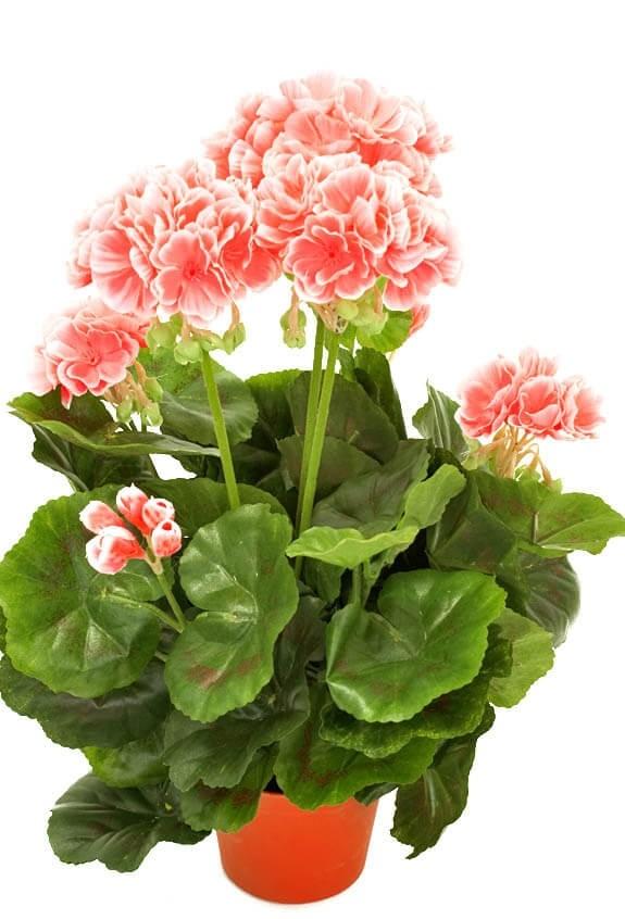 Pelargonia, rosa, konstgjord-blomma