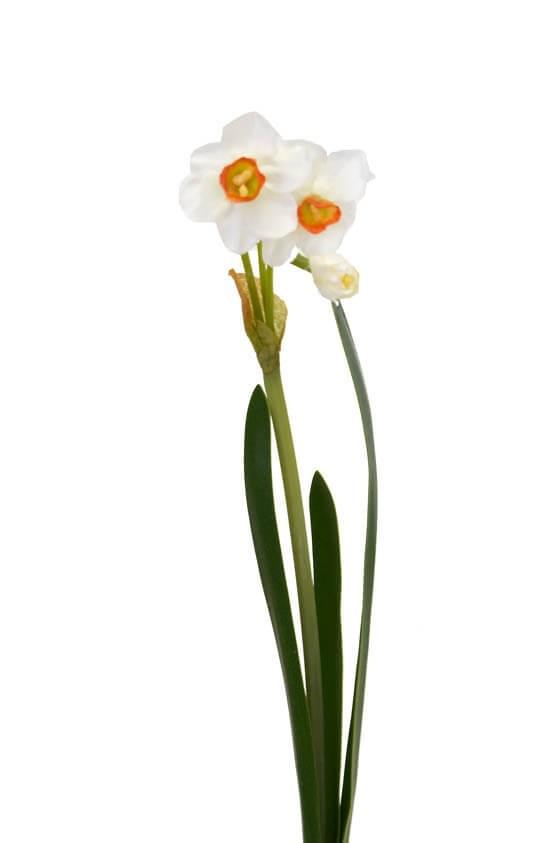 Påsklilja, narciss, vit, konstgjord blomma
