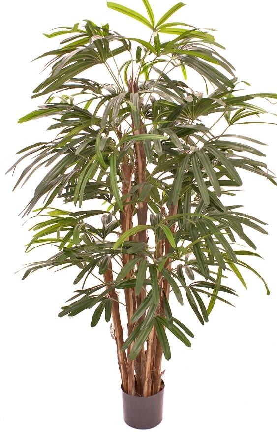 Raphis palm, konstgjord