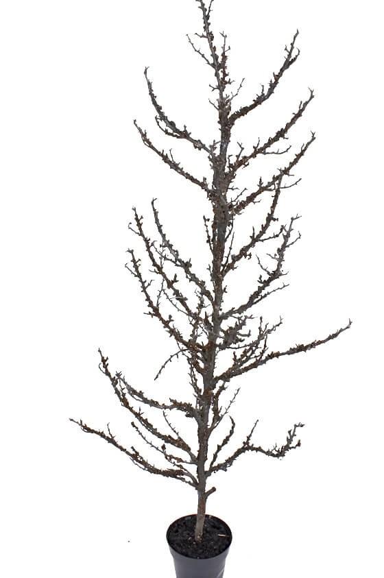 Träd, konstgjort
