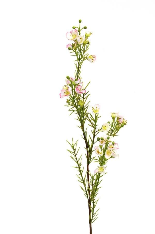 Vaxblomma, rosa, konstgjord blomma
