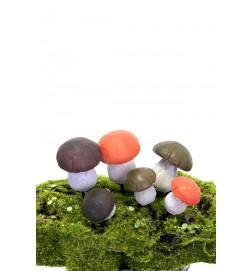svampar Karl Johan, 6-pack