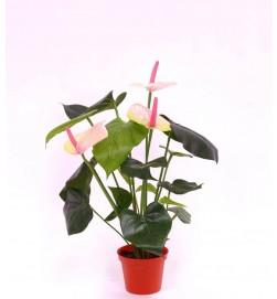 Anthurium, flamingo, ljusrosa, konstgjord