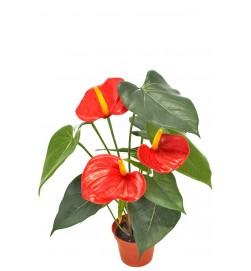 Anthurium, röd, konstgjord